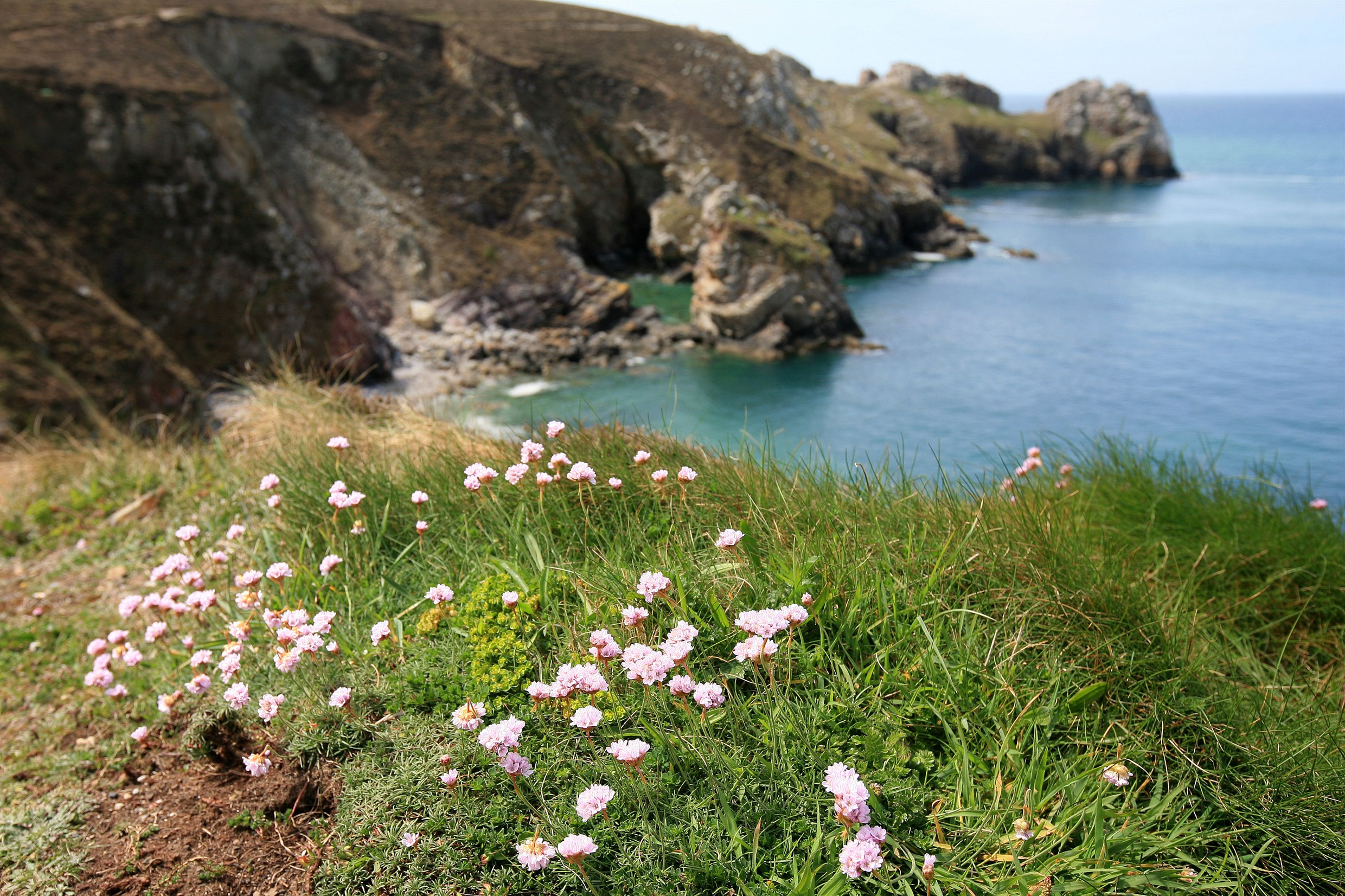 France, Bretagne, Finistere, presqu'ile de crozon, pointe de dinan, rochers, pointe, vegetation, armeries maritimes,